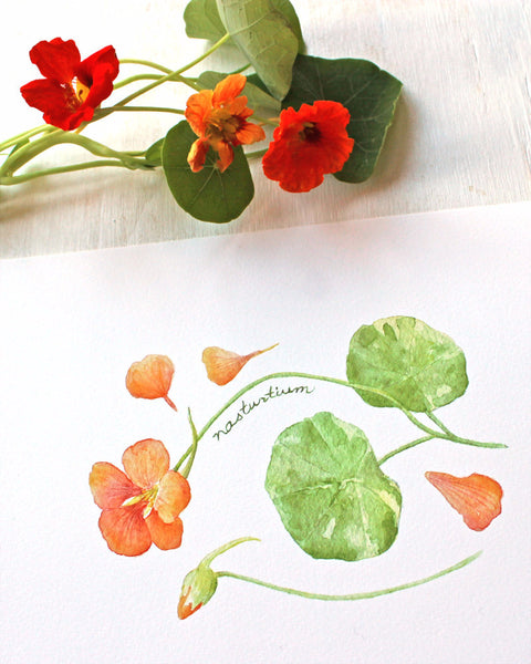 Nasturtiums watercolor print of painting by Kathleen Maunder, Trowel and Paintbrush
