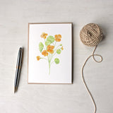 Nasturtiums - Orange floral note cards by watercolor artist Kathleen Maunder