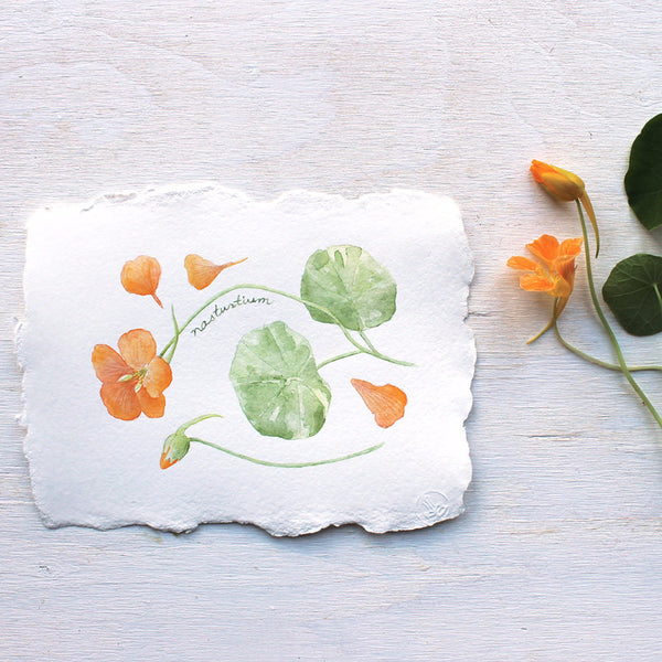 Nasturtiums watercolour painting by artist Kathleen Maunder