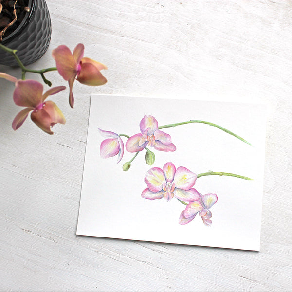 Watercolor of pink and yellow orchids available as 8 x 10 print. Artist - Kathleen Maunder
