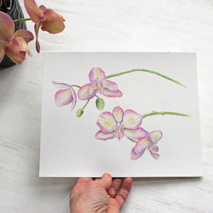 Lovely orchid print based on a watercolor painting by Kathleen Maunder