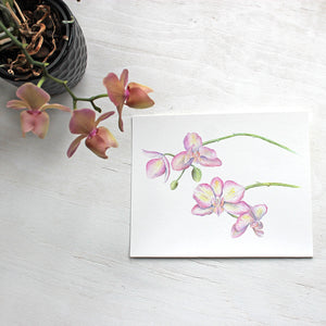 Pink and yellow orchids - Watercolor painting by Kathleen Maunder - Available as 8 x 10 print