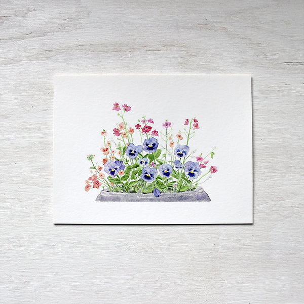 A print of a watercolour painting depicting a flower pot containing blue pansies, pink nemesia, coral diascia and white euphorbia. Artist Kathleen Maunder.