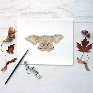 Print of a polyphemus moth watercolor painting by Kathleen Maunder of Trowel and Paintbrush