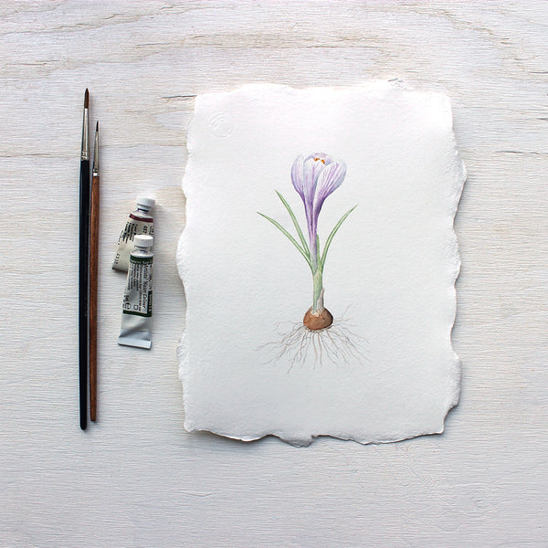 Original botanical watercolor painting of purple crocus by Kathleen Maunder