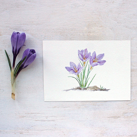 Purple Crocus Watercolor Print