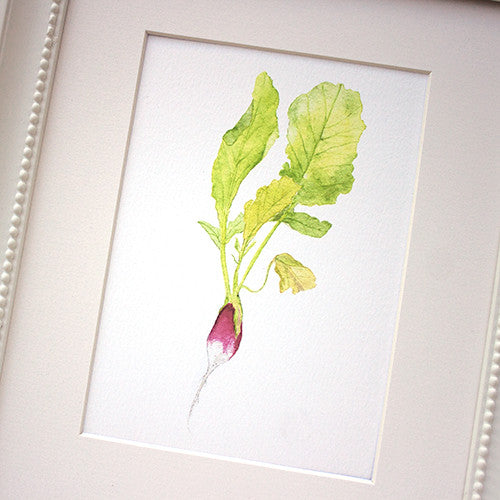 Radish watercolor painting by Kathleen Maunder of Trowel and Paintbrush