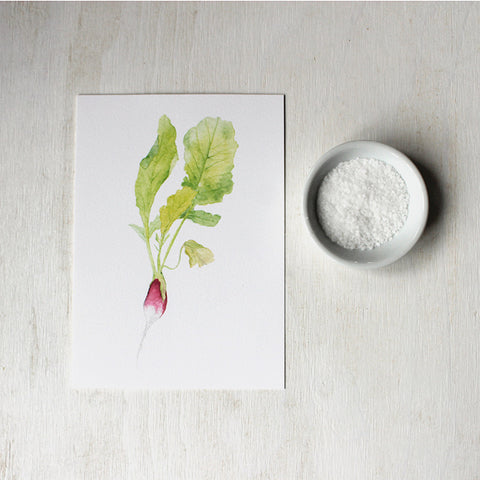 Print of French breakfast radish watercolor painting by artist Kathleen Maunder