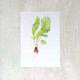 Watercolor print of French breakfast radish by Kathleen Maunder