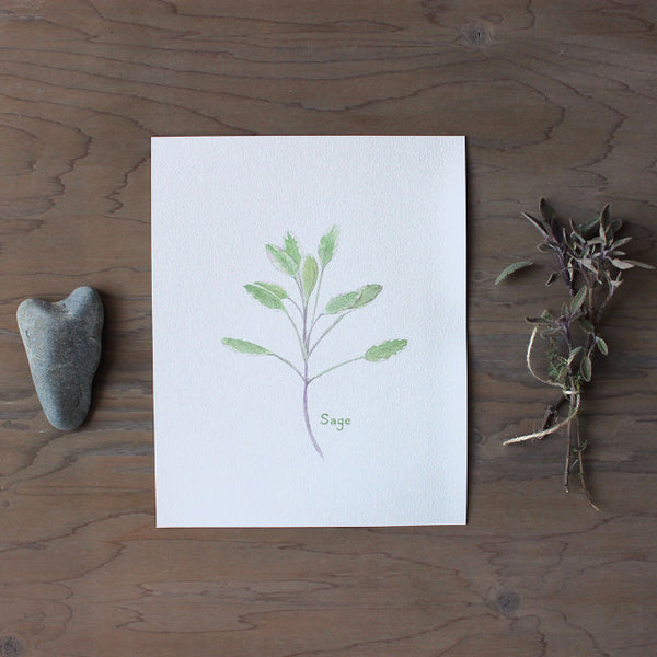 Sage herb print by watercolor artist Kathleen Maunder of Trowel and Paintbrush