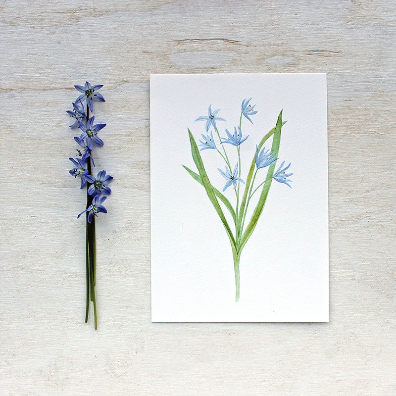 Blue scilla watercolor print by Kathleen Maunder of Trowel and Paintbrush