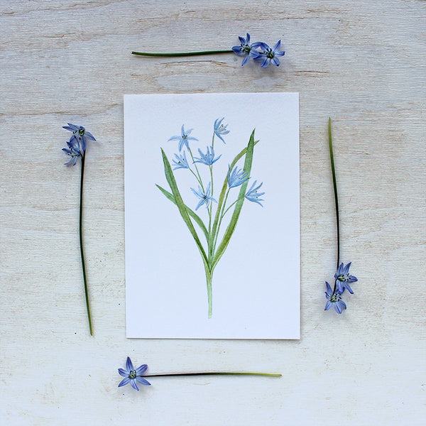 Blue scilla print by watercolor artist Kathleen Maunder of Trowel and Paintbrush