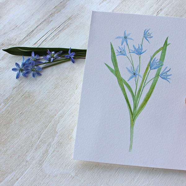 Blue botanical watercolor print - Scilla by artist Kathleen Maunder
