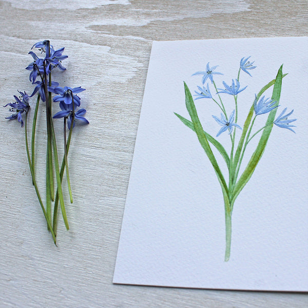 Blue scilla watercolour print by Kathleen Maunder of Trowel and Paintbrush