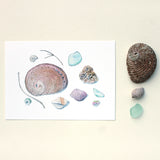 Shells and Sea Glass 5 x 7 Print