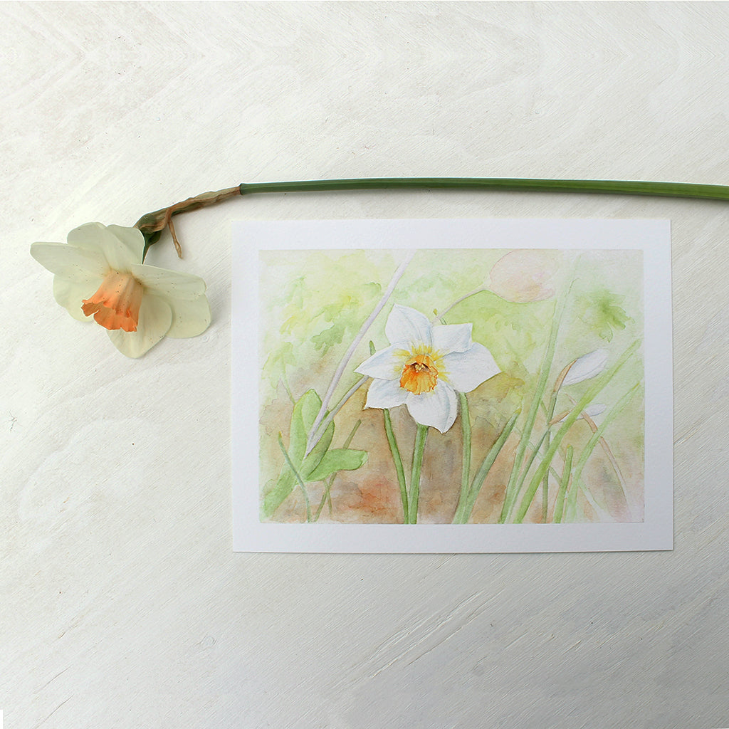 Daffodil Watercolor Art Print by Kathleen Maunder