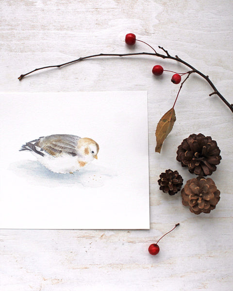 A lovely bird art print of a snow bunting by watercolor artist Kathleen Maunder