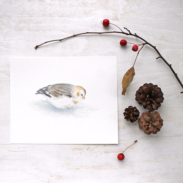 Snow bunting - bird art print by watercolor artist Kathleen Maunder