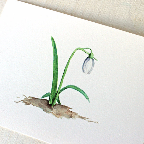 Closeup of snowdrop watercolor print by Kathleen Maunder
