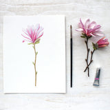 Pink star magnolia botanical illustration by watercolor artist Kathleen Maunder