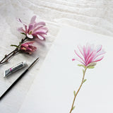 A closer look at my pink star magnolia watercolor painting, available as an 8 x 10 print.
