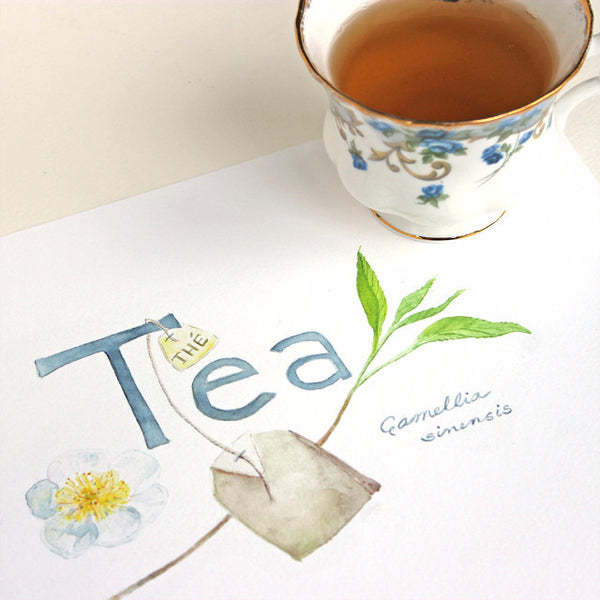 Tea - Thé - Camellia sinensis watercolor painting by Kathleen Maunder