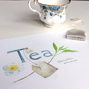Tea watercolor painting of Camellia sinensis by artist Kathleen Maunder