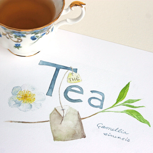 Tea - Thé - Camellia sinensis watercolor painting and handlettering by Kathleen Maunder