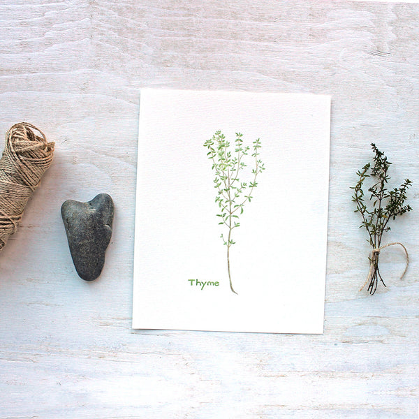 Print of thyme watercolor painting by Kathleen Maunder, trowelandpaintbrush