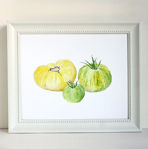Framed yellow and green heirloom tomato print. Watercolor by Kathleen Maunder