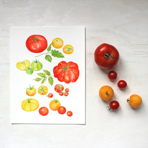 Watercolor paintings of several kinds of red, yellow and green heirloom tomatoes are combined into one art print. Artist Kathleen Maunder.