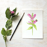 Print featuring watercolor painting of turtlehead flowers and a bee by Kathleen Maunder