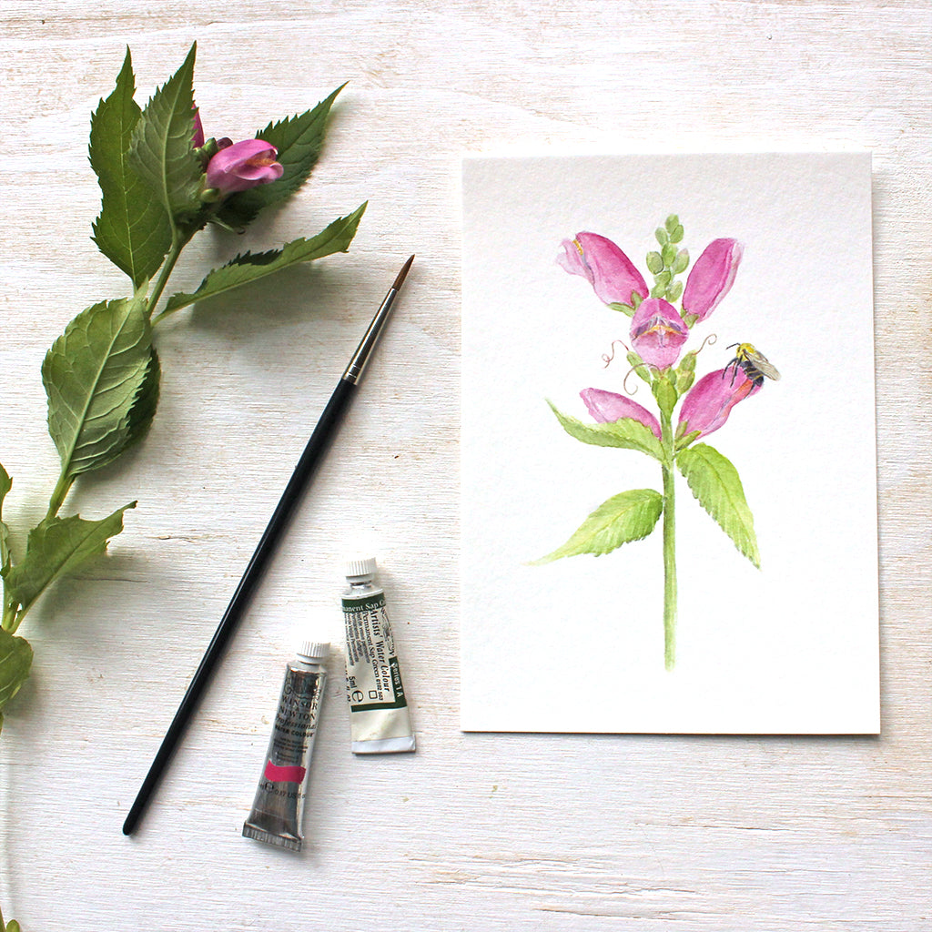 Pink turtlehead flowers and bee - Watercolor painting by Kathleen Maunder - Available as a print