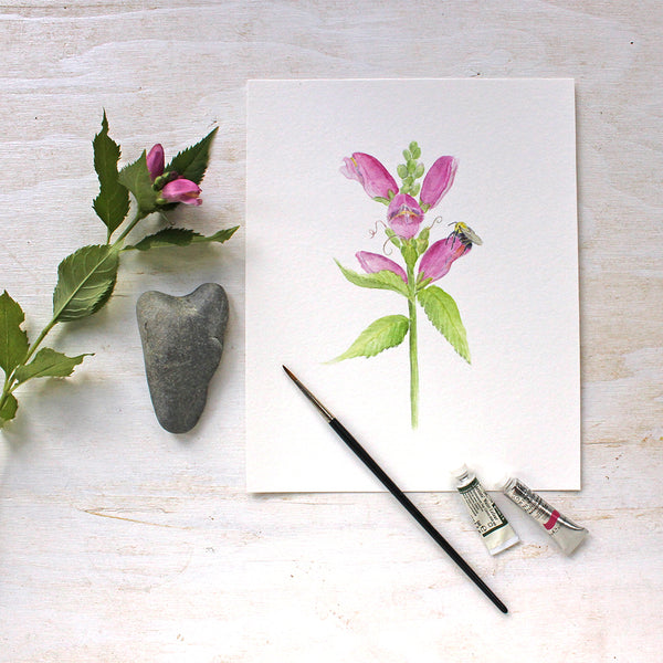 Pink turtlehead flowers (chelone obliqua) and bee - watercolor painting by Kathleen Maunder