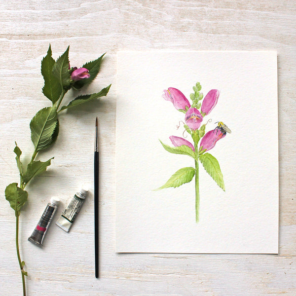 Turtlehead flowers and bee - Watercolor painting by Kathleen Maunder - Available as a print