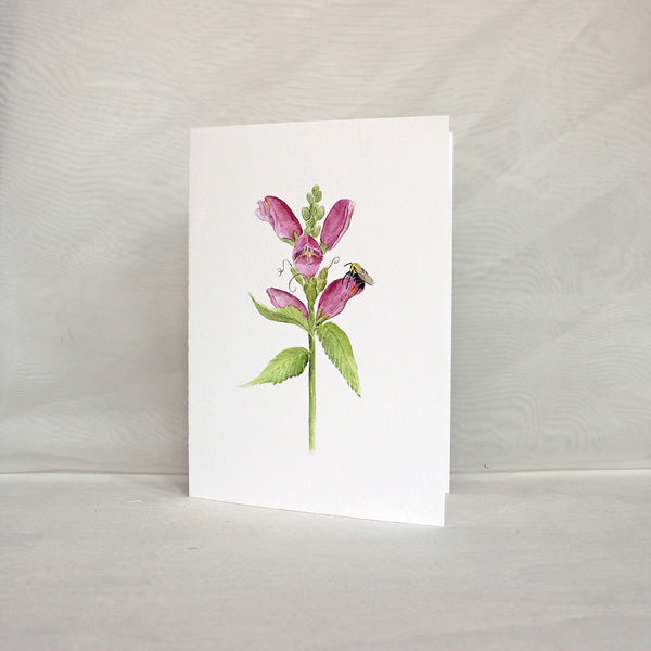 Pink turtlehead (Chelone obliqua) flower and a bee on a note card. Artist Kathleen Maunder.