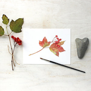 Viburnum leaves and berries watercolor by Kathleen Maunder (trowelandpaintbrush)