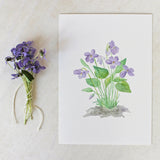 Watercolour print of viola sororia by artist Kathleen Maunder, Trowel and Paintbrush