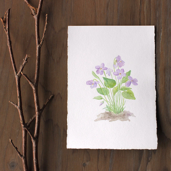 Original watercolour painting of wood violets (viola sororia) by Kathleen Maunder