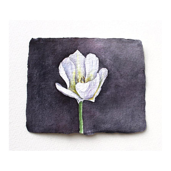 White tulip original watercolor painting by Kathleen Maunder