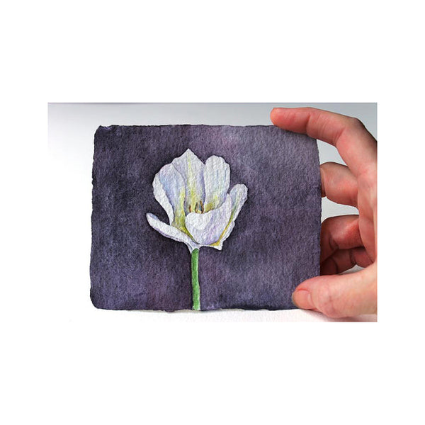 White tulip original watercolour painting by Kathleen Maunder