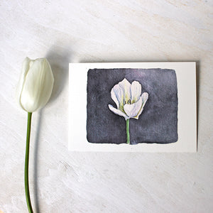Beautiful white tulip print (5 x 7) by watercolor artist Kathleen Maunder
