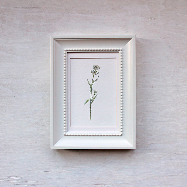 White Yarrow Watercolor Print
