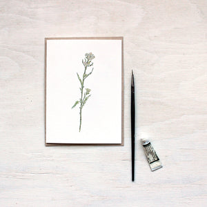 White yarrow watercolor note cards featuring a painting by Kathleen Maunder