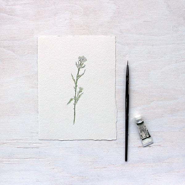 Original watercolor painting of white yarrow (Achillea millefolium) by Kathleen Maunder