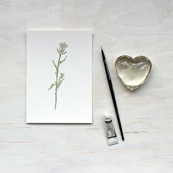 White Yarrow (Achillea millefolium) art print featuring a watercolor painting by Kathleen Maunder