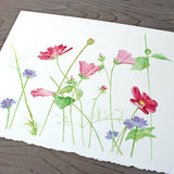 Wildflower watercolor print by Kathleen Maunder