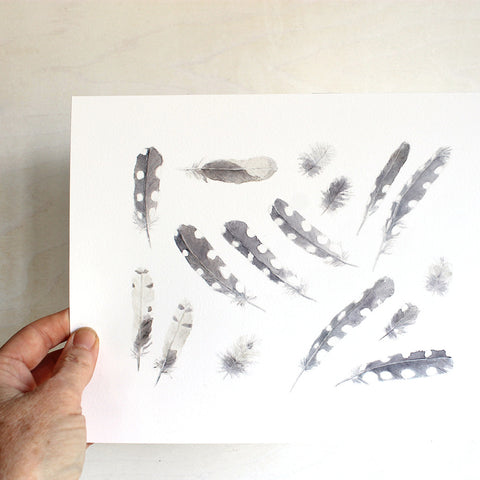 Woodpecker Feathers Print