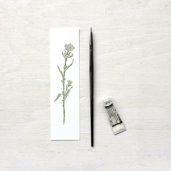 White yarrow watercolor bookmark by artist Kathleen Maunder