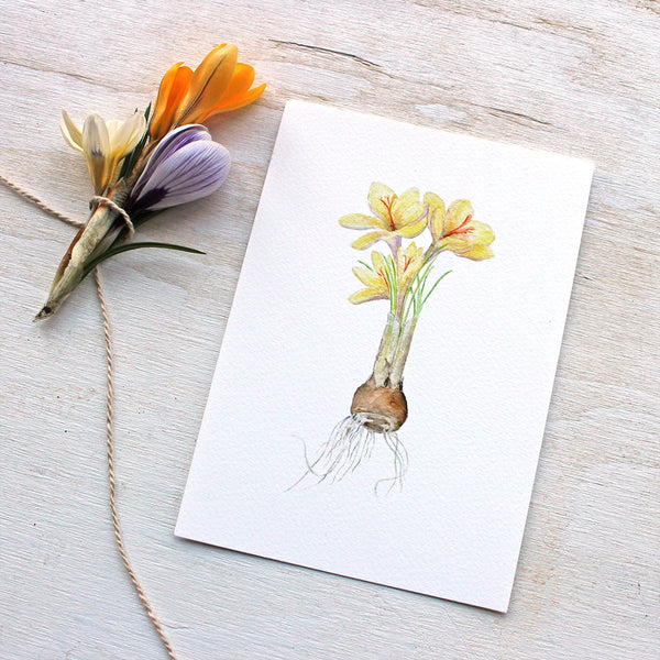 Botanical painting of crocuses by Kathleen Maunder, trowelandpaintbrush.com